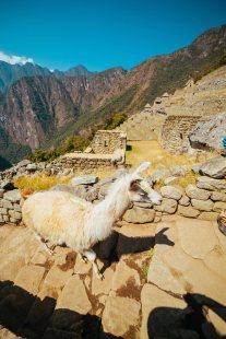 Peru_Manchu-41