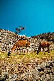 Peru_Manchu-44